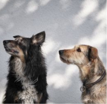 Praxishunde Rana und Lou